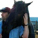 Lew Hastings Nokota horse